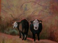 Cow-Study-1