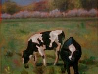 Cow Study #2