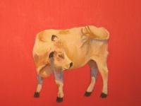 Cow Study 2