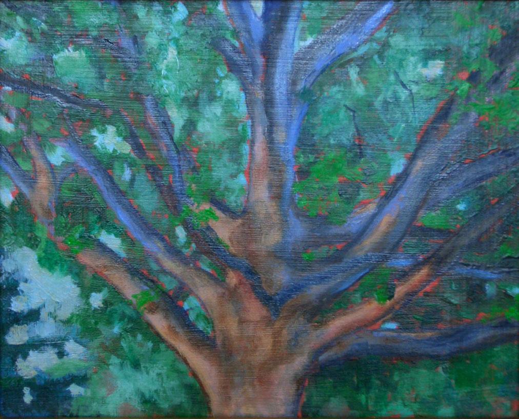 150 Year Old Oak Tree