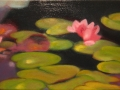 Waterlily-5